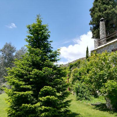 Pinzapo jardín